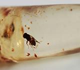 Мадагаскарский копал с насекомыми 7,19 карат