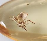 Мадагаскарский копал с насекомым 18,03 карат
