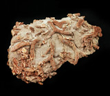 Ископаемый коралл 360 грамм