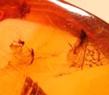 Доминиканский янтарь с насекомыми 9 карат
