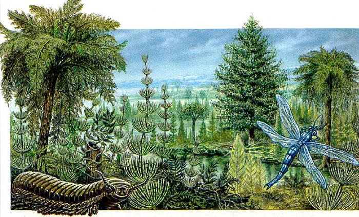 Флора и фауна каменноугольного периода